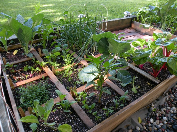 Tips on Small-Space Organic Gardening from Personal Family Farmers